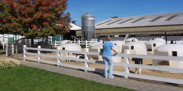 richardson-dairy